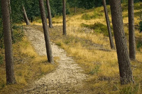 Boswachterij Westerschouwen